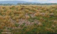 Geländematte Nadelwaldboden