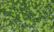 Geländematte Gras / Weideland (gemischt)