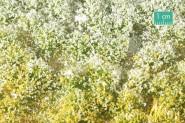 Blütenbüschel, Frühling