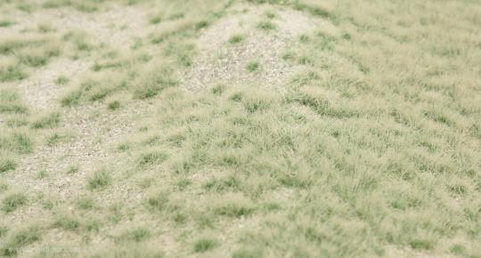 Karst Meadow, Summer