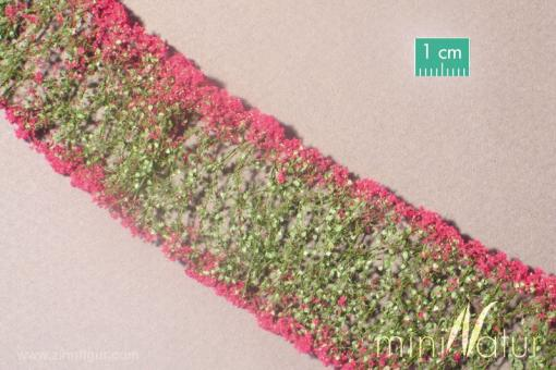 Blumen, Magenta