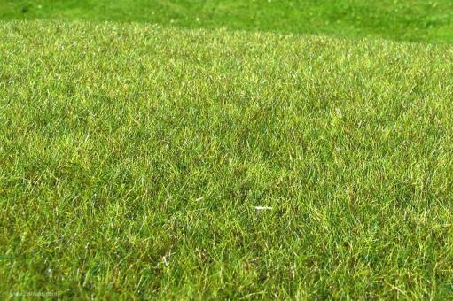 Moor Feuchtgebiet Mittel