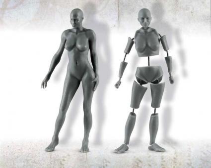 Weibliche Anatomie - 75 mm