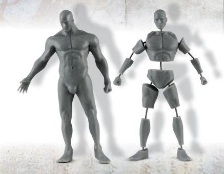 Männliche Anatomie - 75 mm