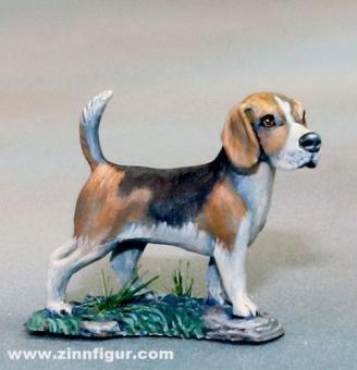 Beagle - 2er Pack